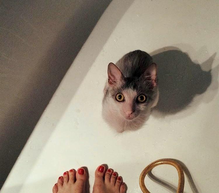Lykoi: cum am gasit langa gunoi o pisica de 2 000 euro